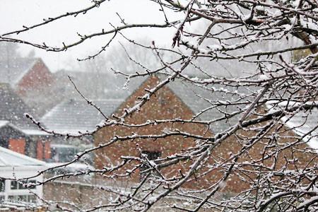 snowtree3