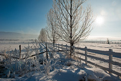 Winter morning, Utah (Photosuze) Tags: morning trees winter sun mist snow landscape utah frost shadows hoarfrost january fences steam pasture fields icy pastoral hebervalley ranches