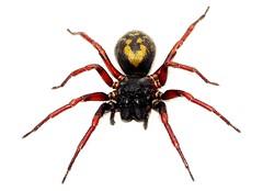 ARACHNID MACRO (kiki nagi) Tags: macro nature insect spider spiders arachnid insects flickraward flickraward5 flickrawardgallery vigilantphotographersunite vpu2 vpu3 vpu4 vpu5 vpu6 vpu7 vpu8 vpu9 vpu10