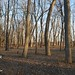 "Illinois Hunting Land for Sale • <a style=""font-size:0.8em;"" href=""http://www.flickr.com/photos/66358149@N06/8427457899/"" target=""_blank"">View on Flickr</a>"