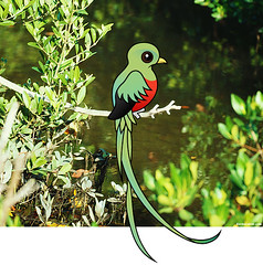 Resplendent Quetzal (birdorable) Tags: cute bird quetzal birdorable