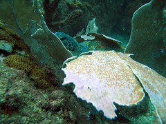 Tartaruga de olho...em mim. (Carlos Costabile) Tags: sea fish beach island mar turtle mergulho dive crab tortuga tartaruga moray peixes arraialdocabo tartarugamarinha moréia nudibrânquio carloscostabile