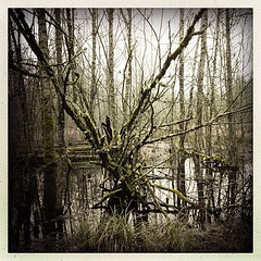 """Pleasant #swamp #trees #hipstamatic #springwater #corridor #trail • <a style=""""font-size:0.8em;"""" href=""""https://www.flickr.com/photos/61640076@N04/8442415404/"""" target=""""_blank"""">View on Flickr</a>"""