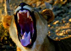 Namibia 06 (AndersHolvickThomas) Tags: