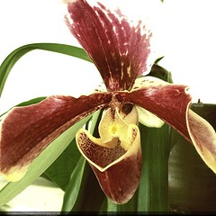 """Orchid. • <a style=""""font-size:0.8em;"""" href=""""https://www.flickr.com/photos/61640076@N04/8457435274/"""" target=""""_blank"""">View on Flickr</a>"""