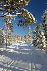 Cross-country skiing (Helena Normark) Tags: winter norway norge srtrndelag crosscountryskiing skitracks nordmarka klbu rx1 langskjlen sonyrx1 sonycybershotdscrx1