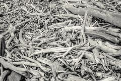 Boneyard (gomezthecosmonaut) Tags: bw driftwood minoltaaf3570mmf4