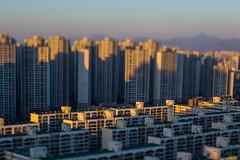 Seoul Old and New Apartments Tilt-Shift (stuckinseoul) Tags: street beautiful asian photography photo cool interesting asia gorgeous korea korean photograph seoul stunning southkorea  jamsil  corea   canoneos6d lensbabycomposerpro lensbabyedge80