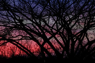 Elm Branches in Sunset IMG_2912 (fused)