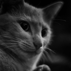 kthe rakete (sommerpfuetze) Tags: bw white black animal cat square nose mono eyes close explore katze tier miau petrait kthe rakete tierportrait schnurrr ldlportraits ktherakete ldlnoir