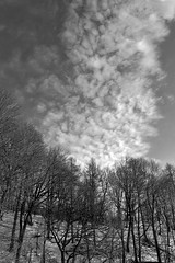 becoming winter 2 (theothermonalisa slowed down with the new) Tags: sky blackandwhite snow clouds possibilities dances