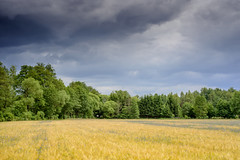 Before The Storm (NoNickMan) Tags: summer nature beautiful bayern bavaria weed nikon afternoon sommer natur feld thunderstorm aussicht gewitter getreide 5528ais weiherhammer nikond800 55ais