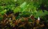 Plants+very small fish (The steelyglint) Tags: plants green leaves movement underwater small aquaruim neontetra fujifinepixxp50