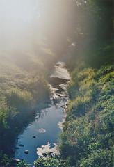 26/386 (ammoniumchlorid) Tags: summer film analog creek backyard sommer bach 365 garten 365project porstcompactreflex
