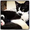 upload (merrickball) Tags: cat square kitten lofi squareformat finnegan stinks iphoneography instagramapp uploaded:by=instagram