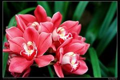 IMG_3915-01 (KUEN-CHERNG) Tags: flowerthequietbeauty