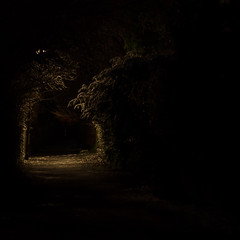 devouring black (pascal.dickhoff) Tags: night dark darkness black contrast light devour devouring way nature outdoor alone dangerous fear