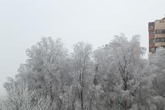Ankara winter... (RKAMARI) Tags: art beautiful building city cold frosted ice minimalism muted nature softness street trees winter