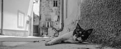 Waking up (DC P) Tags: waking up sleep sleeping sleepy cat kitten street streets streetview streetlife old vintage serene city wide wideangle panorama animal animals canon black beautiful bej blackandwhite bw blackwhite bokeh pov noir blackwhitepassionaward blanco mono monochrome eye eyes angle dof