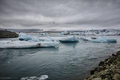laguna glaciar (Mauro Esains) Tags: glaciar hielo agua laguna lava arena cenizas musgo aves fro islandia piedras nuves aire libre paisaje turismo