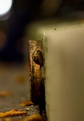 Snail in the City (Lens a Lot) Tags: snail city paris | 2016 asahi optco smc takumar 135mm f25 model 43812 1972 8 blades iris m42 bokeh color depth field vintage manual classic japan japanese prime fixed lens macro close up