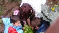 2016 COSECHA (Colegio Abraham Maslow) Tags: internationalgarden colegioabrahammaslow cosecha huerta escolar