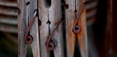 666 (armandocapochiani) Tags: macro armandocapochiani apulia salento stilllife rusty rust closeup close clothespin wood mollete legno ruggine italia italy