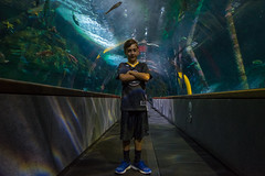 SF Bay Aquarium (noeltykay) Tags: fuji fujifinepix fujixt1 fujifilm fujifilmxt1 mirrorless xt1