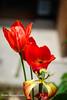 Aya Sofya6-0471rw (Luciana Adriyanto) Tags: travel turkey istanbul museum ayasofya hagiasofia flowers v1olet lucianaadriyanto