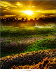 Sunset colors (nandOOnline) Tags: veluwezoom sunlight heide posbank paars heuvels struikheide shadow zonsondergang veluwe nature purple zonlicht sunset hills heather de steeg landschap sunrays landscape natuur