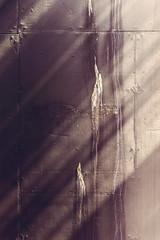 .:: The Creative Birds ::. (Kunfy Nomyek) Tags: 50mm belgie nikon street textured rough light rays urban beautiful fx belgium grunge sunlight nikkor wall dirty d610
