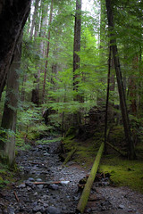 Forest (leyannmeau) Tags: nature natural strathconapark beautiful turtleisland