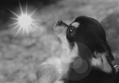 The dog look a dream. (rupenamraniya) Tags: bw portait dog dreams open light bright photography xiang