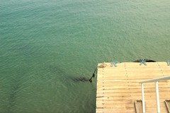 q (lulabaigo) Tags: muelle playa beach agua ocano pacfico