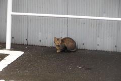 Today's Cat@2016-09-28 (masatsu) Tags: cat thebiggestgroupwithonlycats catspotting pentax mx1