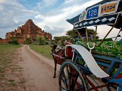 Bagan Horse Cart, Dhammayangyi Paya (JR Hall) Tags: travel horses canon temple eos pagoda asia southeastasia raw burma temples 5d myanmar 2012 bagan jrh dhammayangyi eos5d canonef24105mmf4lisusm viagiare