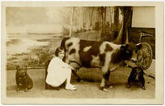 Milking the Euclid Beach Cow (Alan Mays) Tags: old trees girls ohio dogs strange animals vintage children souvenirs lakeerie cows photos antique cleveland fake flags ephemera photographs postcards beaches oh amusing shores bulldogs borders milking foundphotos backdrops amusementparks pennants rppc euclidbeach euclidbeachpark souvenirphotos realphotopostcards studioprops