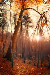 Rivendell (Maxim Slastnikov) Tags: travel sunset red fall nature landscape nationalpark wildlife adler flickraward5 mygearandme krasnodarskykray blinkagain bestofblinkwinners blinksuperstars
