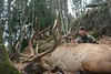 Quebec Elk & Red Stag Hunt 60