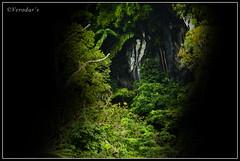 """Caves of Sarawak (VERODAR) Tags: nikon rainforest jungle sarawak malaysia borneo cave kuching bidayuh giam """"flickraward"""" nikond5000 verodar veronicasridar"""