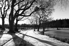 _A5B0966-2.jpg (w11buc) Tags: winter snow ice scotland aberdeenshire scottish loch mintlaw 5photosaday pitfourloch