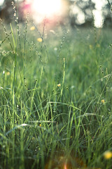 L1000470 / Wiese (Gensu) Tags: flowers flower raw dof bokeh meadow wiese blumen summicron blume lightroom m9 dng summicron50 11826 leicam9 leicasummicronm1250mm adobelightroom4