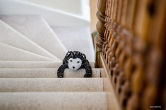 Get Up Here! ~ Explore (BGDL) Tags: wood carpet rocky staircase bannister softtoy nikond7000 ourdailychallenge bgdl nikkor50mm118g elementsorganizer11 lewissbestfriend