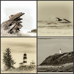 B&W Beach Day (mwbergeron01) Tags: blackandwhite bw lighthouse collage dolphin mosaic seagull northheadlighthouse longbeachpeninsula capedisappointmentlighthouse