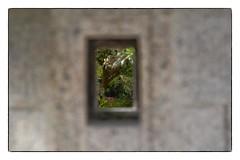 View Through the Wall - Morikami Gardens, FL (gastwa) Tags: macro nature water fountain gardens japanese nikon focus control florida perspective 85mm shift andrew bamboo full frame manual morikami fullframe fx tilt f28 sensor d800 tiltshift pce gastwirth d800e andrewgastwirth