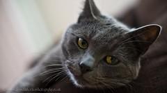 DSC05835 (Steve J Richardson) Tags: cat sony slt catseye a55 sonyalpha sigmaf1450mm
