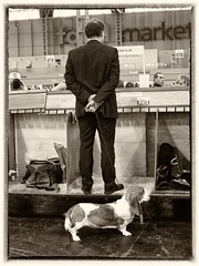 One man and his dog (World of Izon) Tags: dogs blackwhite dogshows crufts bassethounds