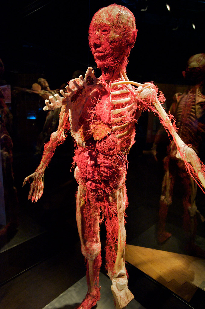 The World\'s most recently posted photos of plastinate - Flickr Hive Mind