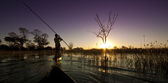 The Okavango Delta, Botswana [Explored, best position #3] (michaelbaynes87) Tags: africa travel trees sunset vacation holiday tree water standing river boat delta botswana rearview mokoro africansky okavangodelta amazingsky