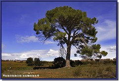 Su majestad, el rbol. (Antonio Zamora) Tags: blue trees winter sky espaa cloud paisajes naturaleza color tree beautiful azul clouds canon landscape arbol landscapes spain rboles arboles natura paisaje colores cielo nubes rbol campo invierno llanos nube lanscape cuenca beautifull lamancha llano castilla mancha hierba castillalamancha llanura cauntry manchuela antoniozamora manchuelaconquense